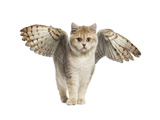 Winged Cat Poster