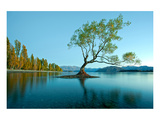 Tree Lake Wanaka New Zealand Art