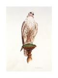 Saker, 1988 Giclee Print by Mary Clare Critchley-Salmonson