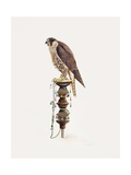 Passage Peregrine, 1986 Giclee Print by Mary Clare Critchley-Salmonson