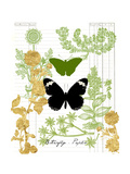 Garden Botanicals & Butterflies Poster by Devon Ross