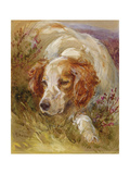 A Spaniel Giclee Print by James Jnr Hardy