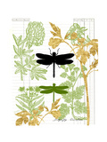 Garden Botanicals & Dragonflies Print by Devon Ross