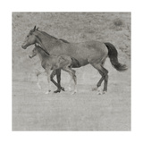 Lets Gallop Prints by Heather Johnston