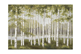 Spring Birch Tree Grove Prints by Jill Schultz McGannon