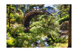 Moon Bridge Over a Small Creek Photographic Print by George Oze