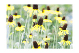 Field Of Dreams Two Photographic Print by George Oze