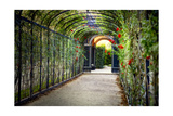 Rose Trellis In Schonbrunn Palace Photographic Print by George Oze