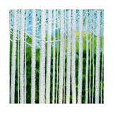 Birch Grove Affiches par Herb Dickinson