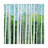 Birch Grove Photographic Print by Herb Dickinson