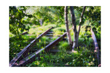 Birch Trees Of High Line Park, New York City Photographic Print by George Oze