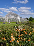 Kew Palm House Photographic Print by Charles Bowman