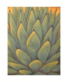 Sunlit Agave Photographic Print by Gayle Faucette Wisbon