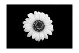 Mono Flora Photographic Print by John Gusky