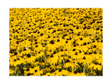 Yellowness Photographic Print by John Gusky