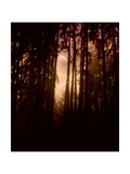 Autumn Night Photographic Print by Julie Fain