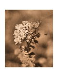 Butterfly Flowers Photographic Print by Julie Fain