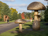 Kew Fungi Photographic Print by Charles Bowman