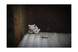 Frog Photographic Print by Julie Fain