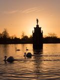 Swans On Lake Photographic Print by Charles Bowman