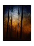 Deep In The Forest Photographic Print by Julie Fain