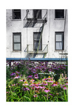 Urban Meadow Of Manhattan, New York City Photographic Print by George Oze