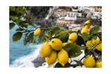 Amalfi Coast Citrus Fruit, Positano, Italy Photographic Print by George Oze