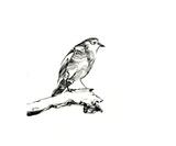 Western Bluebird Photographic Print by Grim Wilkins