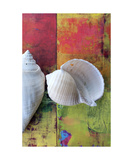 Two Seashells Photographic Print by Elena Ray
