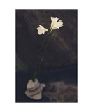 Wabi Sabi Ikebana Photographic Print by Elena Ray