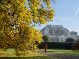 Kew Palm House Autumn Photographic Print by Charles Bowman
