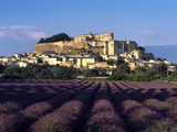 Grignan Lavender Photographic Print by Charles Bowman