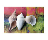 Three Seashells Photographic Print by Elena Ray