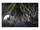 Dark Hedges Northern Ireland Poster
