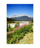 Mount Saskatchewan and fireweed Photographic Print by Ronald A Dahlquist