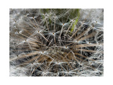 Dandelion Seeds Abstract Photographic Print by Steve Gadomski
