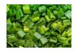 Green Onion Photographic Print by Steve Gadomski
