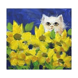 Gold Eye White Persian in Yellow Flowers Photographic Print by sylvia pimental