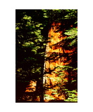 The Boole Tree Photographic Print by Ronald A Dahlquist