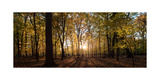 Midwest Forest Photographic Print by Steve Gadomski