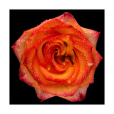 This Magic High Rose Photographic Print by Steve Gadomski