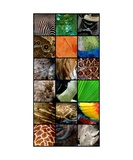 One Day at the Zoo Photographic Print by Michelle Calkins