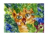 Hiding Tabby Cat Photographic Print by sylvia pimental