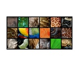 One Day at the Zoo ll Photographic Print by Michelle Calkins