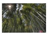 Arashiyama Bamboo Grove Posters