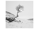 The Winter Tree Giclee-tryk i høj kvalitet