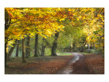 Autumn Walk Print