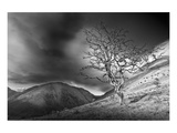 The Hawthorn Tree Art