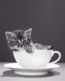 Chat-Tasse Prints