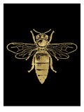 Bumblebee Golden Black Prints by Amy Brinkman